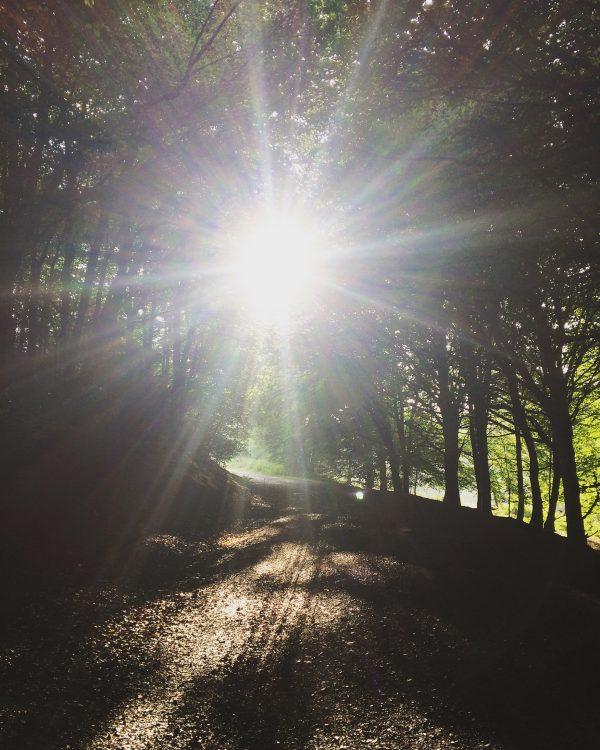 llantrisant-forest