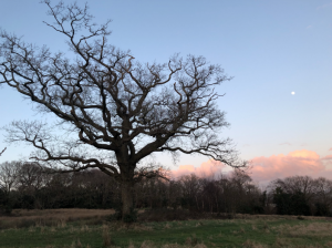 winter-colour